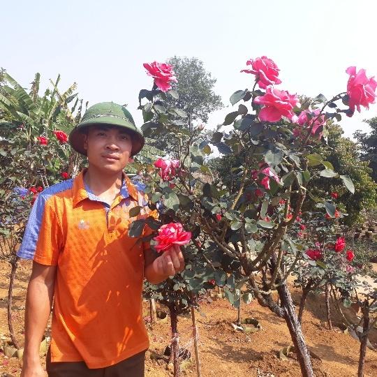 Vườn hồng cổ Trung Quốc bạc tỷ đẹp như mơ độc nhất vô nhị ở Lai Châu
