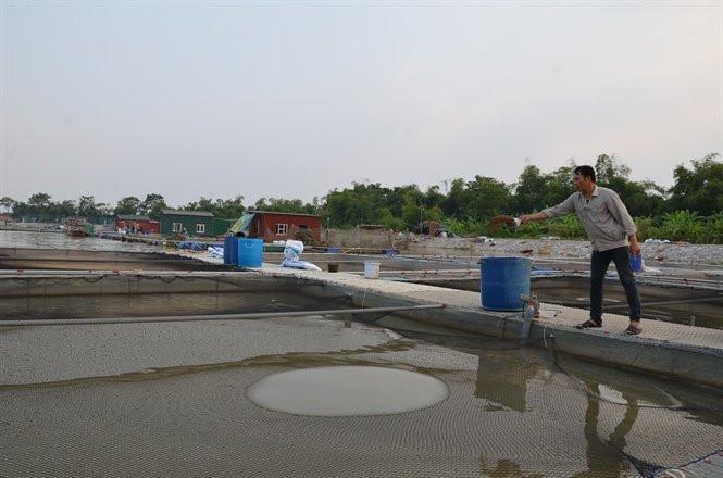 Ly kỳ nuôi 'cá chép ma' không vảy trên sông, thịt giòn như tràng lợn Ca-chep-ma-khong-vay-1