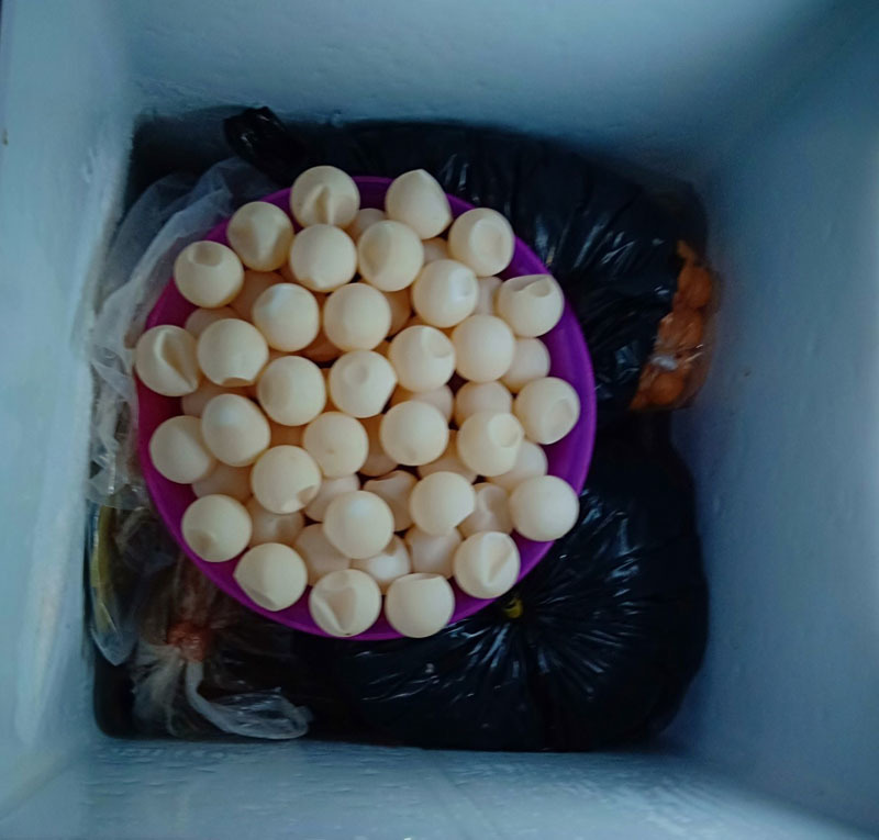 Phát hiện vụ tàng trữ 85 kg trứng và nhiều bộ phận của vích quý hiếm