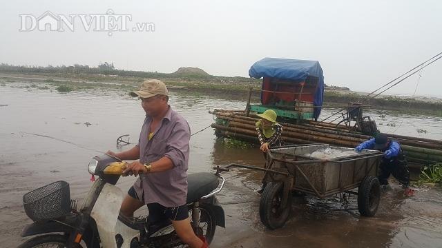 Nam Định: Săn vàng trắng nổi lập lờ bờ biển, kiếm chục triệu/ngày