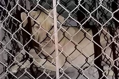 Nữ lao công nguy kịch vì bị chó lai của sinh viên nuôi trong ký túc xá cắn