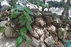 Ly kỳ chuyện 'săn vàng' và truyền thuyết đá nổi ở Thoại Sơn
