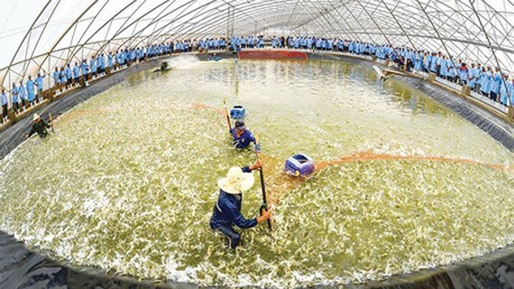 Vietnam's agriculture applies science-technology for sustainable development