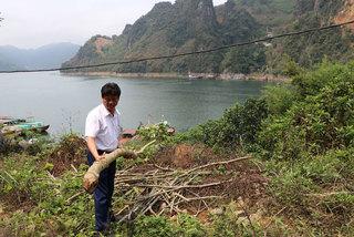 Hòa Bình: 200 cây sưa 10 năm tuổi bị kẻ xấu cưa đổ gục