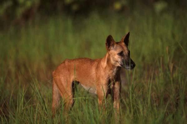 Bé 14 tháng bị chó hoang tấn công, bố kịp thời giải cứu