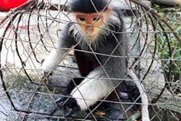 Six people sentenced for violating regulations on rare animals