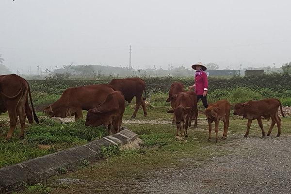 47 dự án đón đầu về Hà Nội, 2.000ha đất hoang bò nhẩn nha ăn cỏ