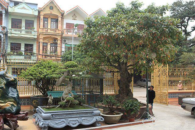 Vườn cây nhà đại gia: Sanh Bảo Đại 30 tỷ, lộc vừng phát lộc 8 tỷ