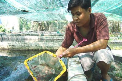 Bán con tép tý hon hơn 50 triệu: Anh kỹ sư Sài Gòn kiếm đậm