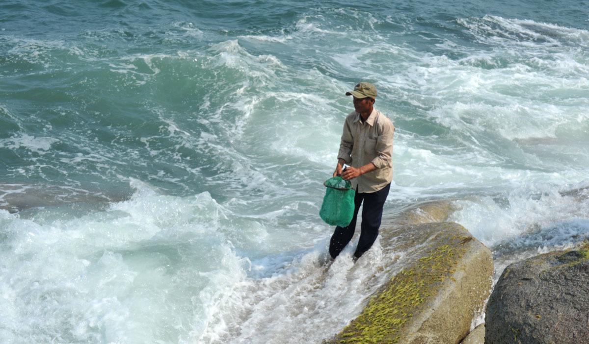 Kỳ lạ loài rau lăn tăn, sóng đánh ầm ầm vẫn xanh, dân mạo hiểm săn