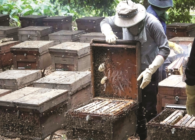 Honey season in Hung Yen