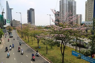Ho Chi Minh City streets glow with vibrant flowers