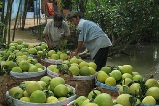 Vietnamese fruit farmers encouraged to apply GAP standards