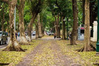 Hanoi in falling leaf season
