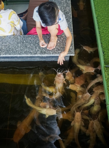 Coffee shop aquarium makes a splash in Can Tho city
