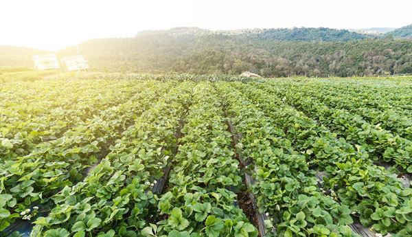 Đầu tư BĐS Hòa Bình: Nghỉ dưỡng sinh thái kết hợp nông nghiệp