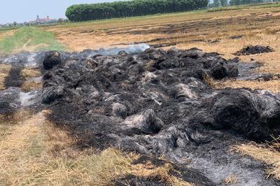 Côn đồ thôn ở Quảng Bình thiêu rụi 950 cuộn rơm giữa cánh đồng