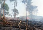 Provinces in Vietnam asked to be on full alert for possible forest fires