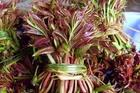 Loại cây có độc nhưng rất nhiều người muốn ăn với mức giá cực cao