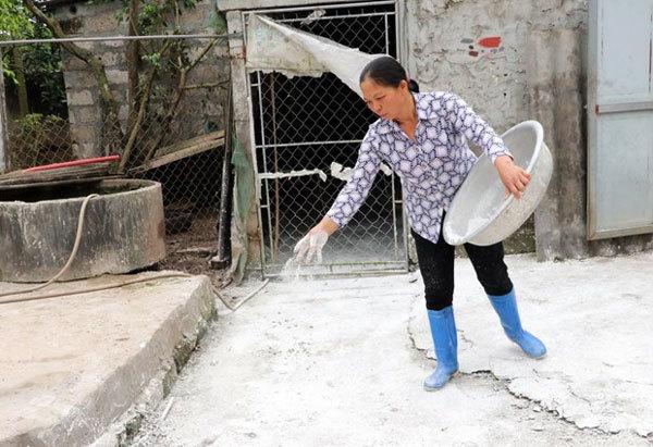 African swine fever,prevent,Nam Dinh