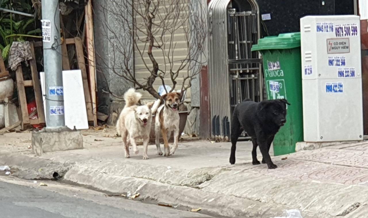 Ông Đoàn Ngọc Hải bị chủ vật nuôi chửi bới khi đi bắt chó thả rông