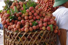 'Mù mờ' thông tin về dán tem truy xuất trái cây?