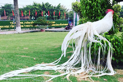 Gà quý tộc trắng toát: Đuôi dài 2 mét, giá 100 triệu đồng