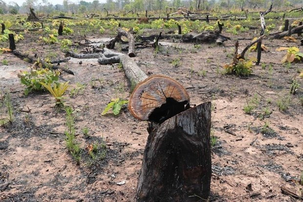 Criminal charges in Quang Binh's deforestation case