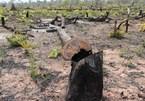 Criminal charges in Quang Binh's deforestation case