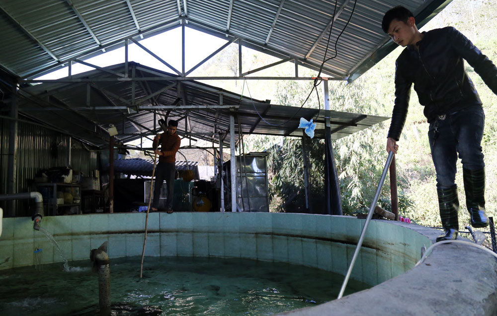 Heat wave causes mass fish deaths in Sapa