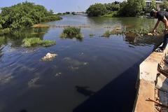 Sông Hàn 'thoi thóp' vì vệt nước thải đen ngòm, óng ánh váng dầu