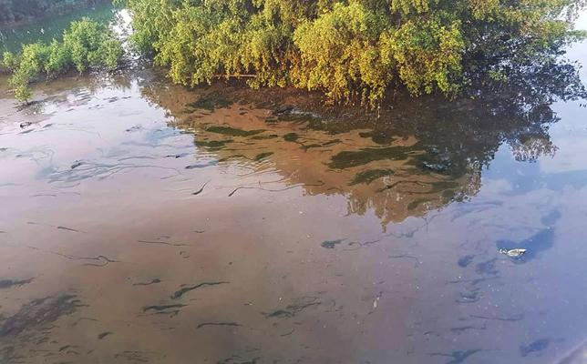 ô nhiễm môi trường,sông Hàn,Đà Nẵng