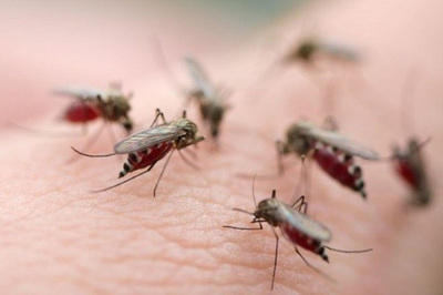 Việt Nam tiếp tục cuộc chiến chống căn bệnh sốt rét