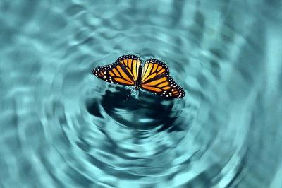 'Hiệu ứng cánh bướm' trong kinh doanh: Đi tìm 'cánh bướm' Việt