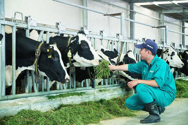 'Chìa khóa' chinh phục người dùng của sữa tươi Vinamilk