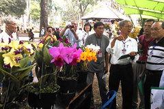 HCM City to hold first Orchid Festival