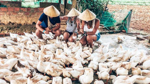 Try a duck massage in Quang Binh Province