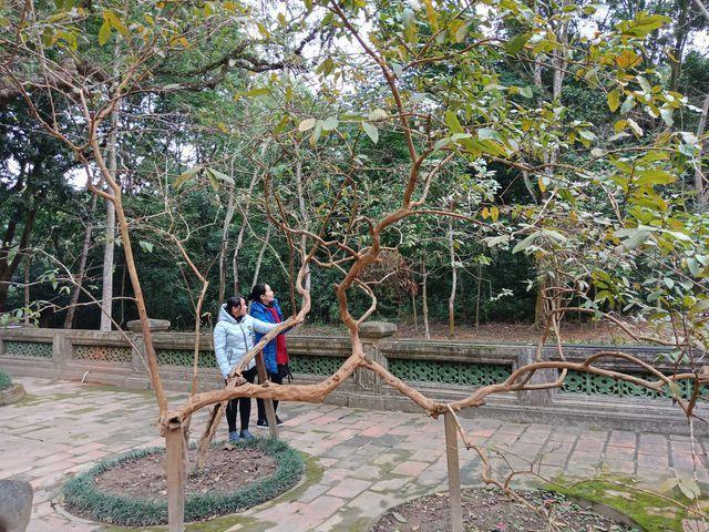 Cây ổi biết 'cười', cây đa 300 năm di chuyển một lần 'độc nhất' Việt Nam