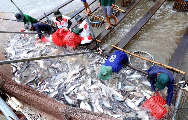 US raises anti-dumping tariffs on Vietnamese tra fish