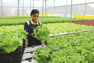 Vietnamese agriculture strengthened by M&A