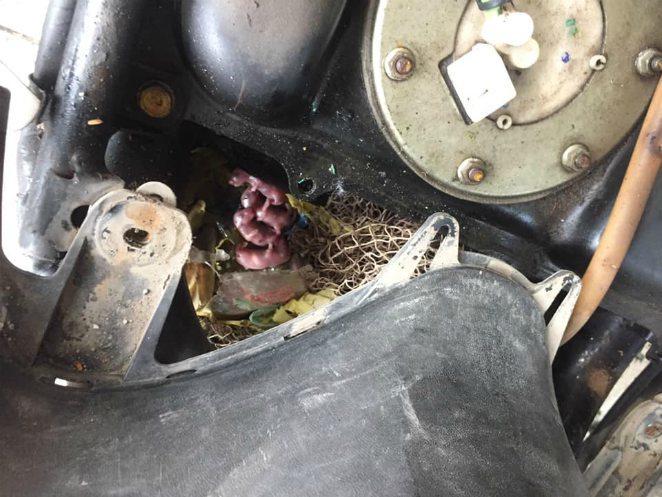 Chuột đẻ con nhung nhúc trong xe ga Honda LEAD