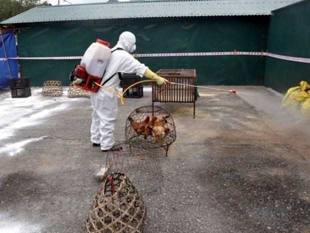 A/H5N6 avian flu outbreak reported in Lang Son,social news,vietnamnet bridge,english news,Vietnam news,news Vietnam,vietnamnet news,Vietnam net news,Vietnam latest news,vn news,Vietnam breaking news