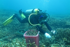 Con Dao conservationists take steps to save coral