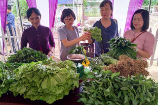 Ethnic women find success growing organic vegetables