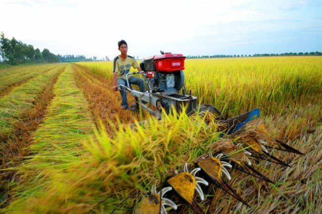 Second thought for rice dominant farming