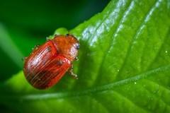 Tại sao sâu bọ lại không thể đi đường thẳng?