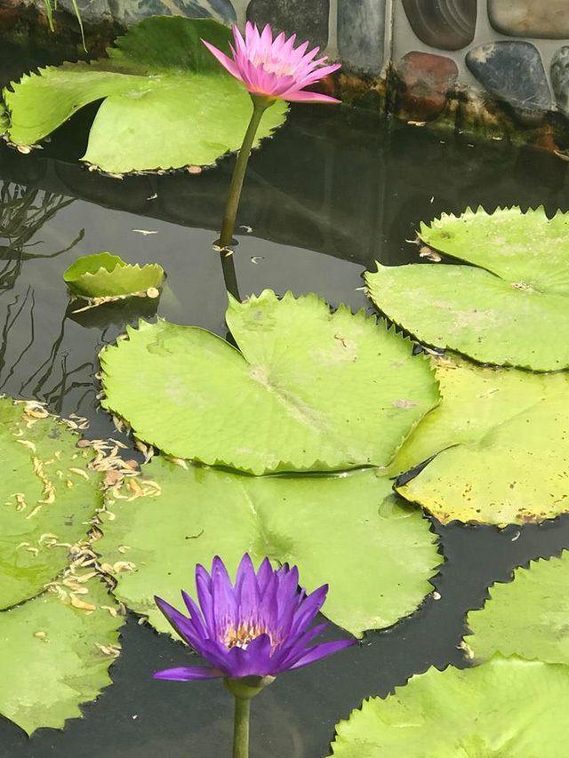 Hồ Ngọc Hà,biệt thự của Hồ Ngọc Hà,làng sao