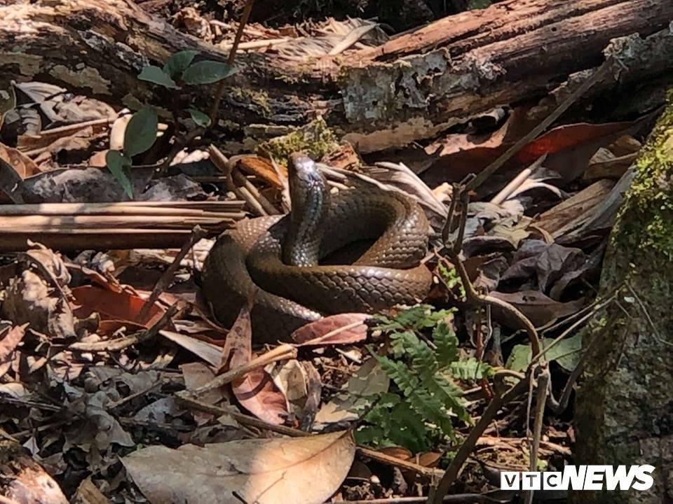rắn độc