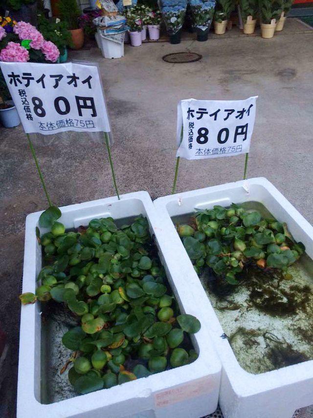 5 loại cây mọc hoang tại Việt Nam, sang nước ngoài thành 'thần dược' đắt giá