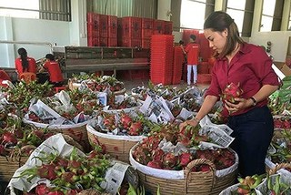 fruit export,China tightens veggie and fruit import